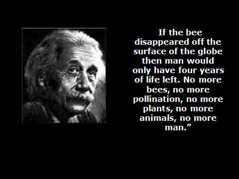 Einstein over bijen